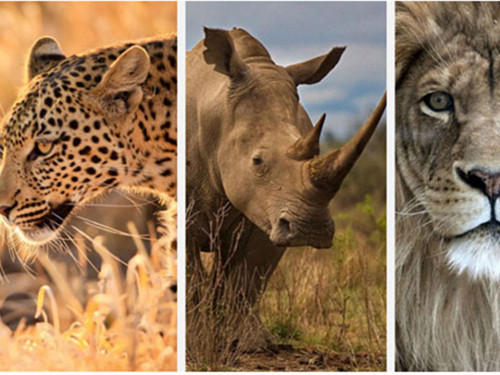 ÉCOVOLONTARIAT ET PROTECTION DES BIG 5 EN AFRIQUE DU SUD