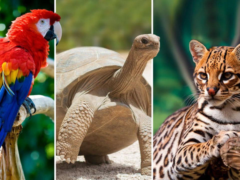 LE DESIGN ET LA COMMUNICATION AU SERVICE DES REFUGES ANIMALIERS