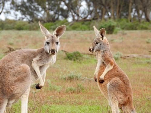 THE AUSTRALIAN DREAM!