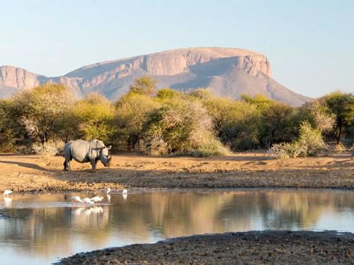 ESCAPADE DANS LA FAUNE SUD AFRICAINE (MISSION ÉCOVOLONTAIRE)