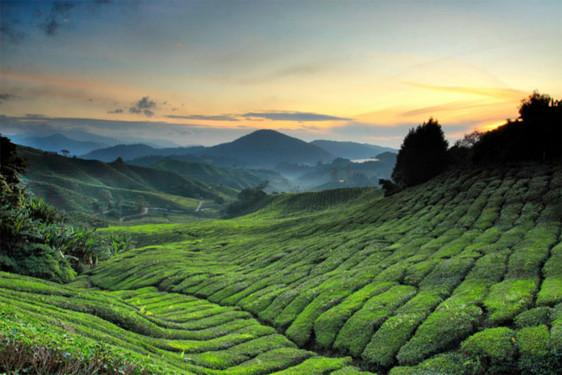 SupAgro en Malaisie : deux étudiants à la rencontre des agriculteurs !