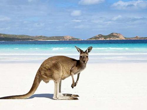 The Australian way of life : immersion culturelle et exploration de la faune aquatique