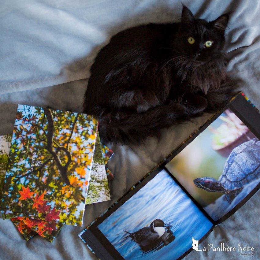 livre la panthere noire photographe